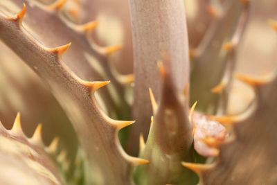 spiked succulent