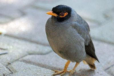 black and grey bird
