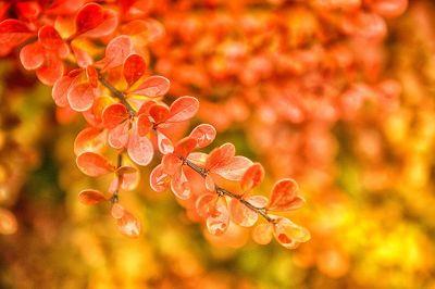 orange leaf petals