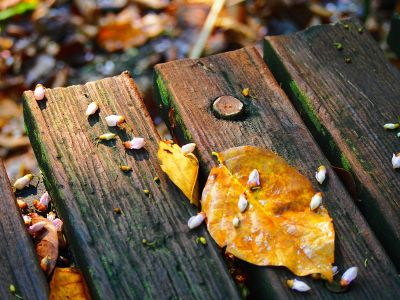 fall deck
