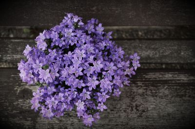 purple flowers on wooden background