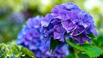 purple is beautiful