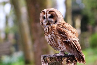 focused phot of owl