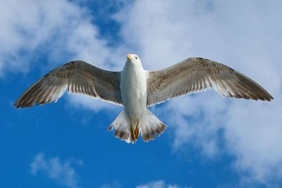 clear picture of a bird flying