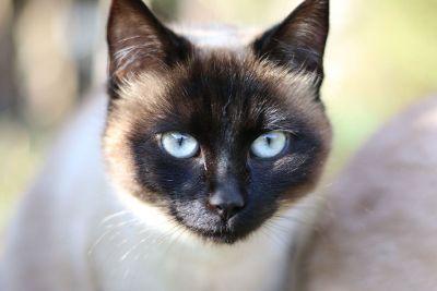 mugshot of a cat