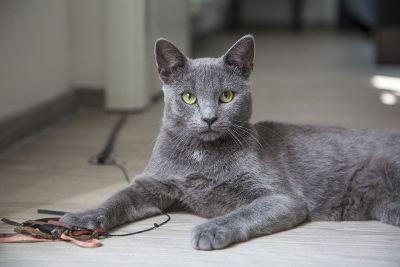 gray cat in hallway