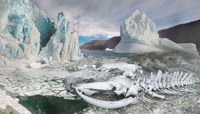desolate ice