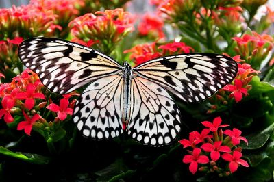 beautiful butterfly contrast with flowers