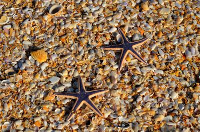 starfish on the seashore