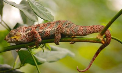 lizard on a limb