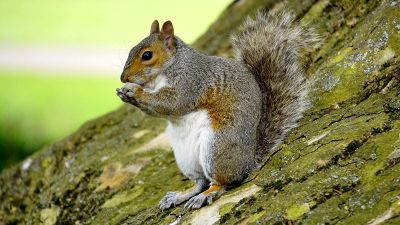 squirrel is eating