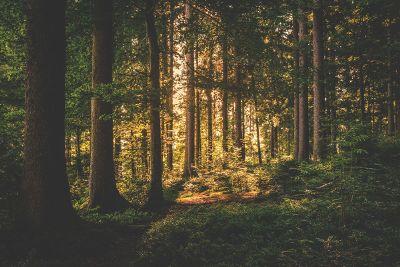 sunshine in forest