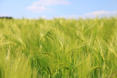 greenery field stock