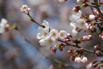 a flower branch
