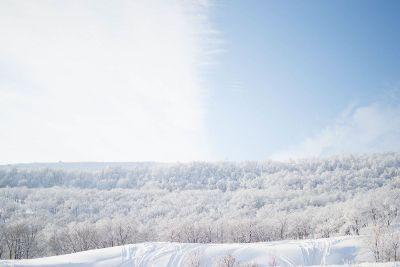 frozen treetops