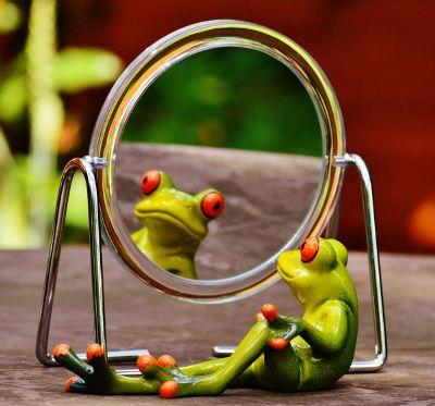 frog looking in mirror