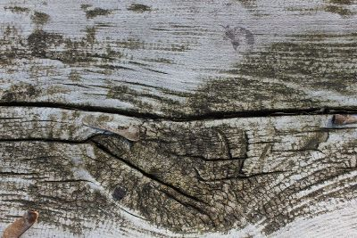 upclose weathered driftwood