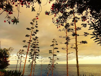 tall trees besides the sea