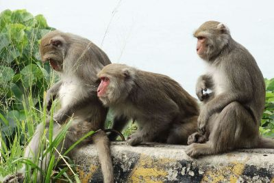 three monkeys watch