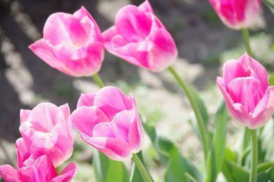pretty flowers in sunlight