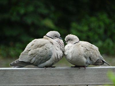 two fluffy birds