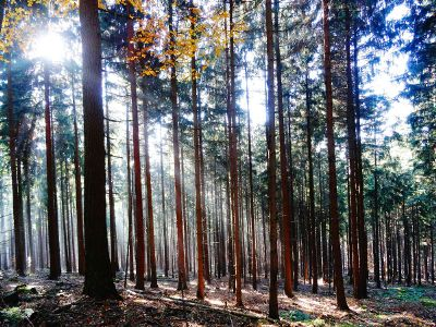 sunlight streaming through a forest
