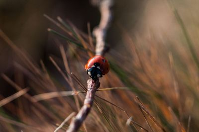 ladybug on a branch
