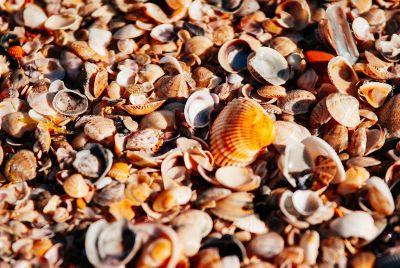 lots of seashells