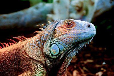 life in galapagos