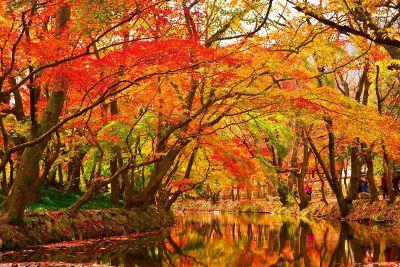 beautiful autumn waterway