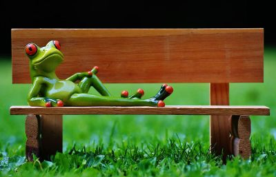 frog on bench