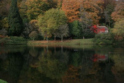 fall forest and reflective pond