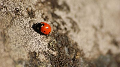 ladybug on tree bark