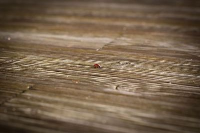 ladybird on wood