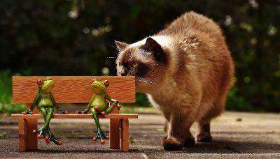 fluffy siamese cat investigating figurines