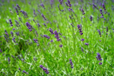 the flower in purple