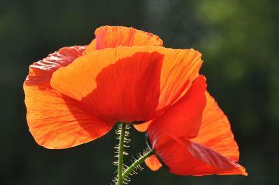 red orange flowers in focus