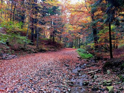 forest with path in autumn
