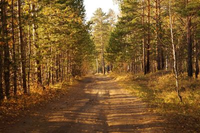 worn dirt road bordered by trees
