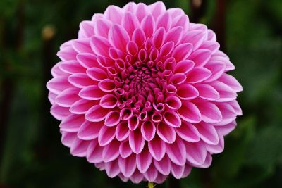 lovely pinkish folded type flower