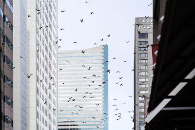 birds in a cityscape