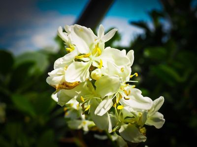 white flowers in teh center