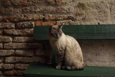cat sitting on green bench