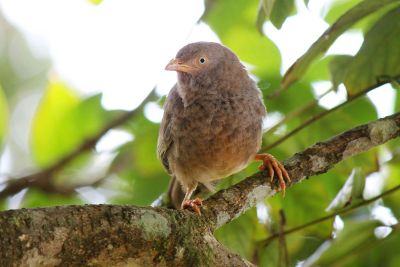 brown bird perched on a branch
