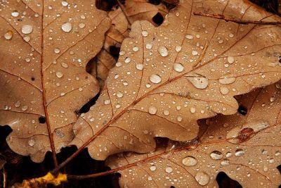 water droplets on brown leaves