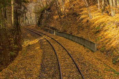 train tracks through the forest