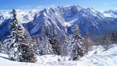 snowy forest surrounded by mountains