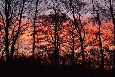 woodland sunset