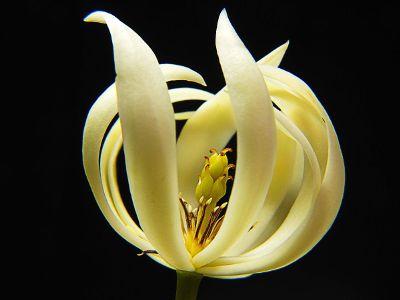 white exotic flower