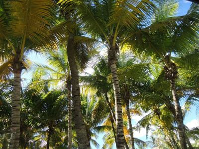 palm trees in daytime